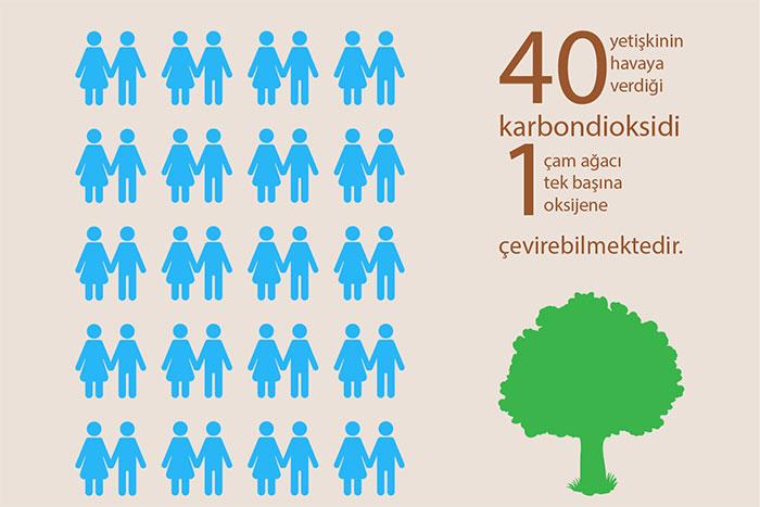 1 Ağaç 40 Kişiye Oksijen Üretiyor